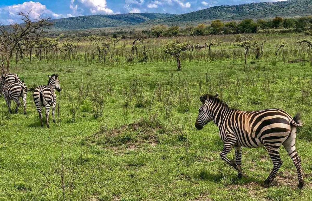 visitar ruanda